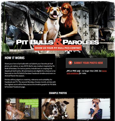 pit bulls contest app