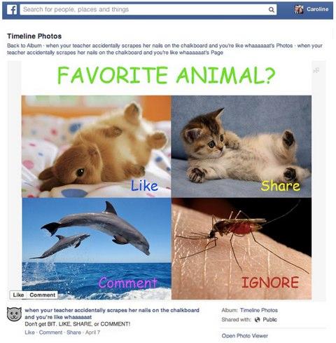 facebook spam update