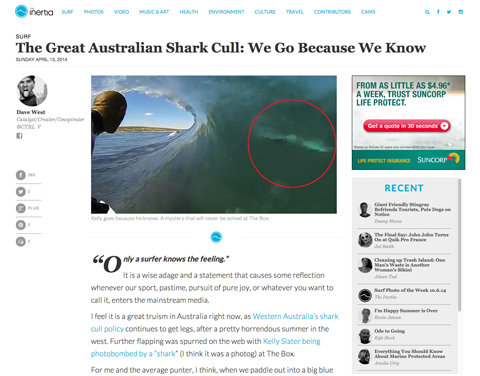 shark cull post