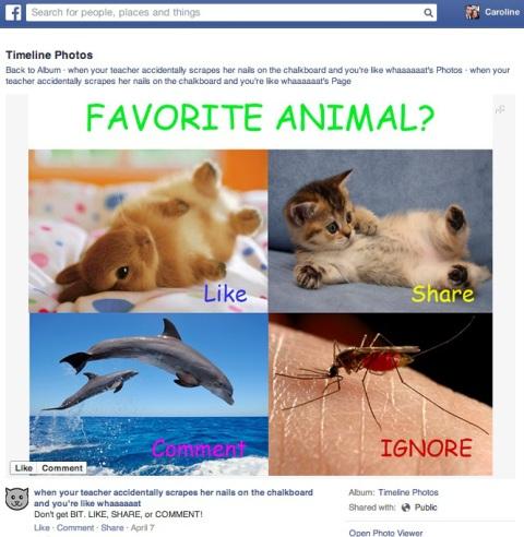 facebook link bait