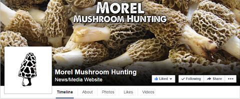 Morel Mushroom Hunting