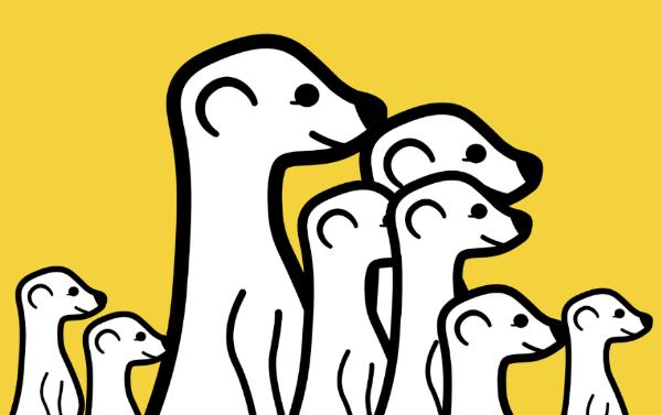 meerkat live video