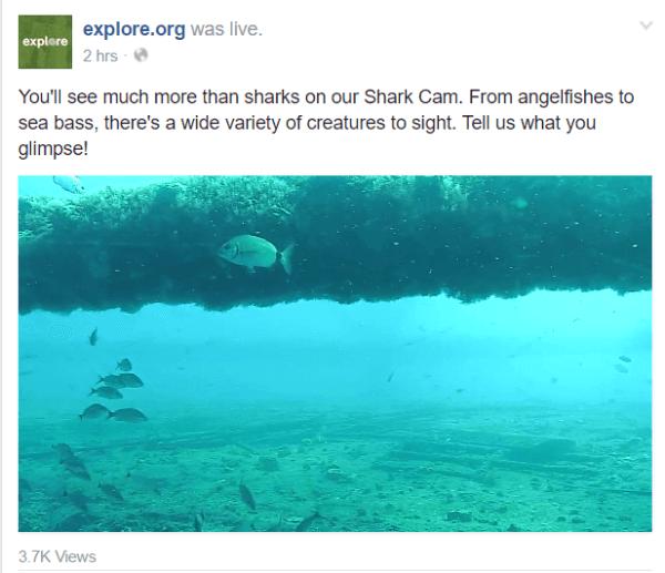 facebook live continuous broadcast