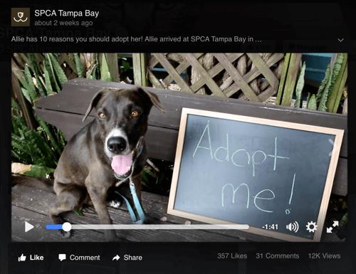 spca tampa bay facebook video