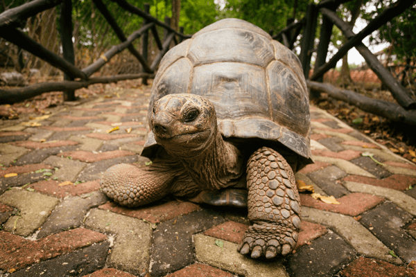 Mike has always been the tortoise, not the hare.