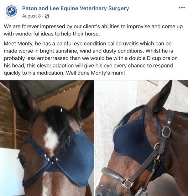 Example of Facebook post with UGC from Paton and Lee Equine Veterinary Surgery.