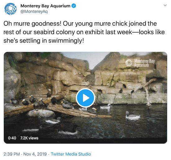 tweet from Monterey Bay Aquarium as an example of a brand's social media voice