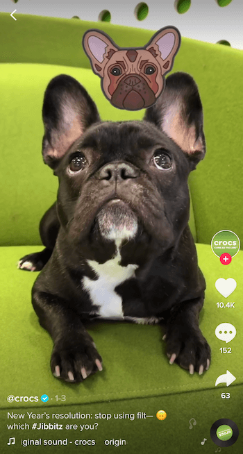 TikTok business example featuring dog