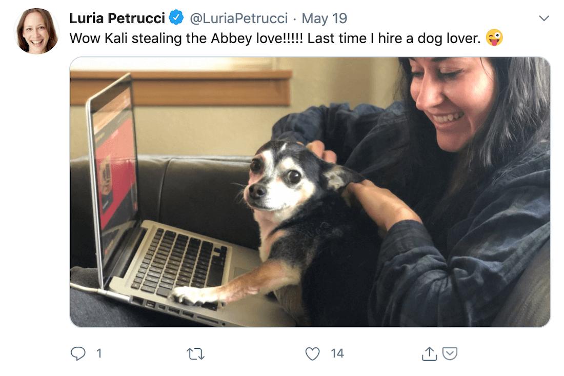 screenshot of Luria Petrucci tweet