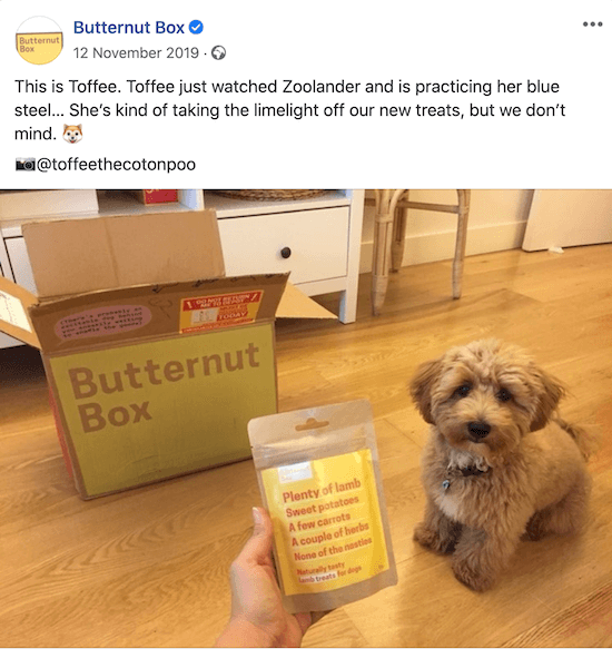 example of a user-generated content post with a testimonial from butternut box tagging @toffeethecotonpoo