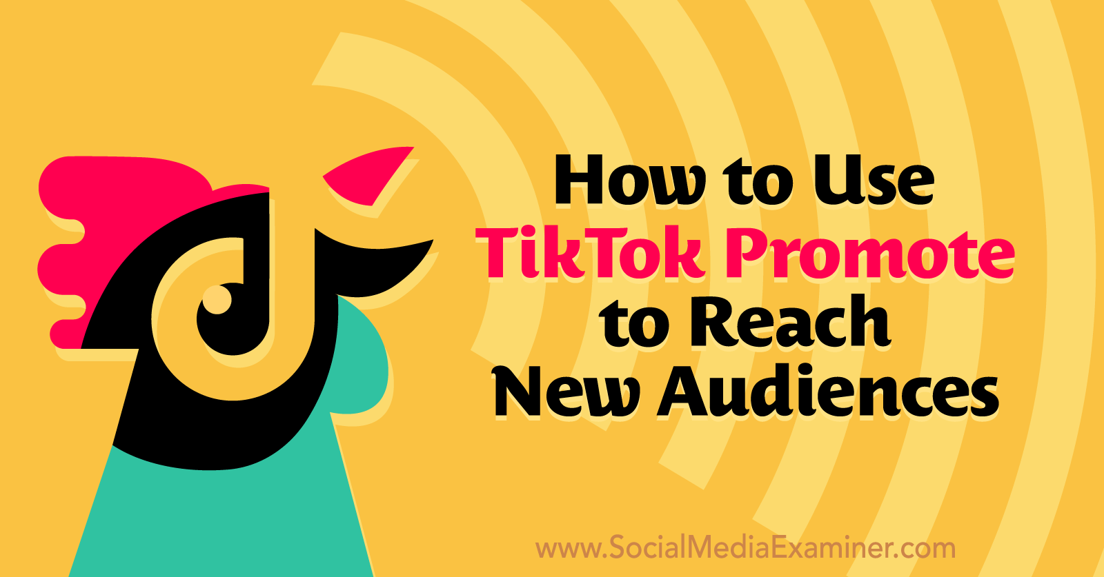 How to Use TikTok Promote to Reach New Audiences on Social Media Examiner.